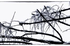 pcphotogweb-12
