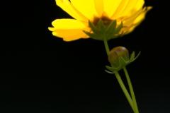 pcphotogweb-13